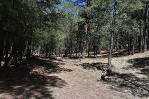Lot for sale in Forest Lakes, AZ