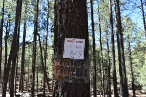 1 Acre Lot for Sale in Forest Lakes